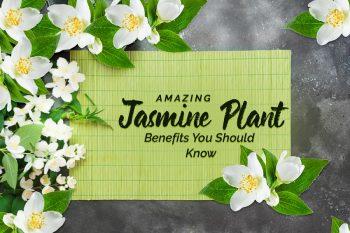 Jasmine, genmedicare